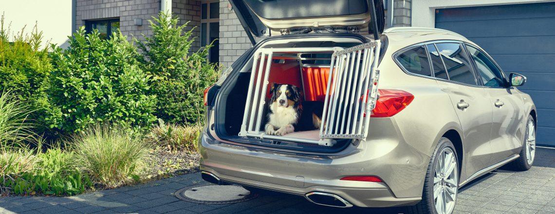 Med vožnjo poskrbite tudi za svojega hišnega ljubljenčka